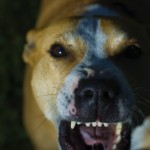Dog bites: Legal responsibility when pet escapes and attacks